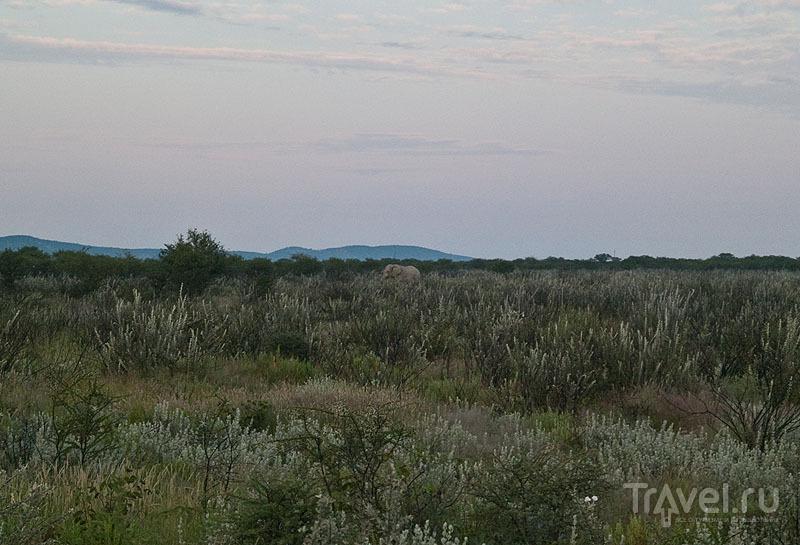 Слон сливается с окружающей природой, Этоша / Фото из Намибии