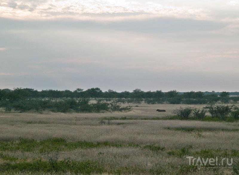В центре кадра - лев, парк Этоша / Фото из Намибии