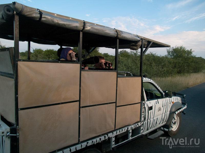 Туристы наблюдают за львами в бинокли, Этоша / Фото из Намибии