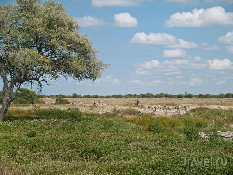 Зебры и газели пришли на водопой, Этоша / Фото из Намибии