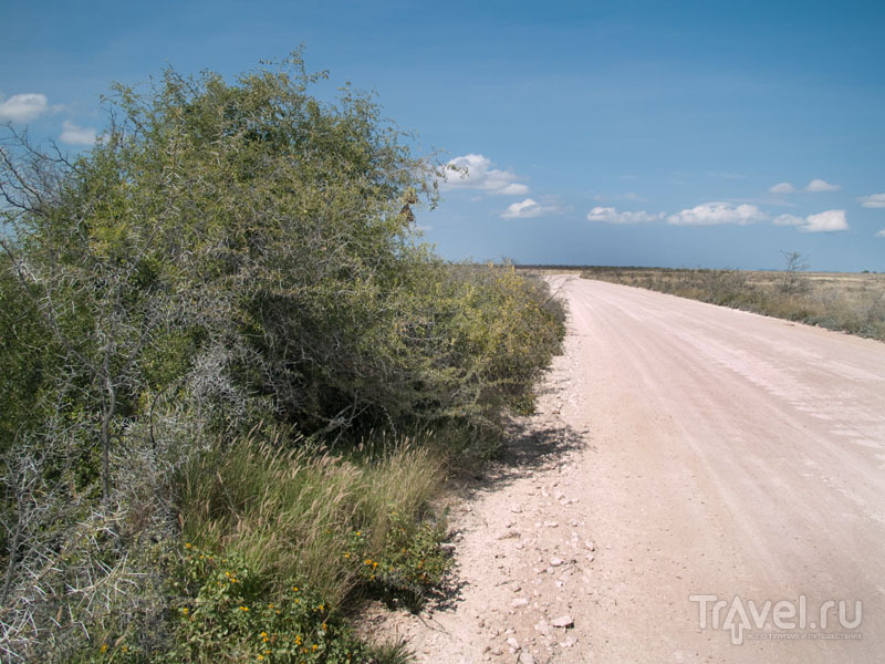 Куст, под которым спряталась львица / Фото из Намибии