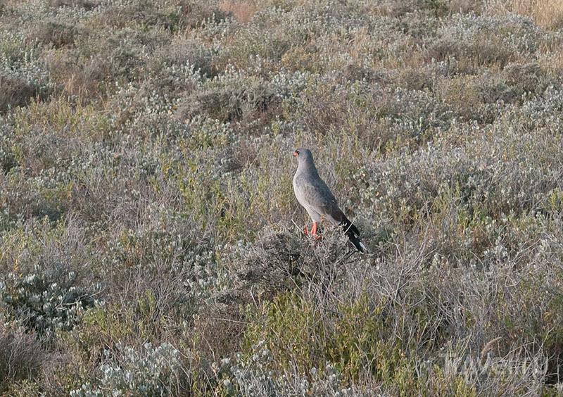 Красивая птичка, парк Этоша / Фото из Намибии