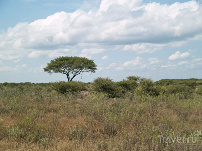Типичный пейзаж парка Этоша / Фото из Намибии