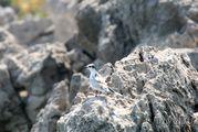 Птица около причала / Черногория