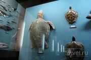 Морские черепахи / Польша