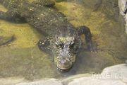 Крокодил / Польша