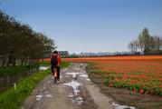Утренний дождь / Нидерланды