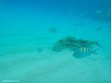 Яркие рыбки / Виргинские острова (США)