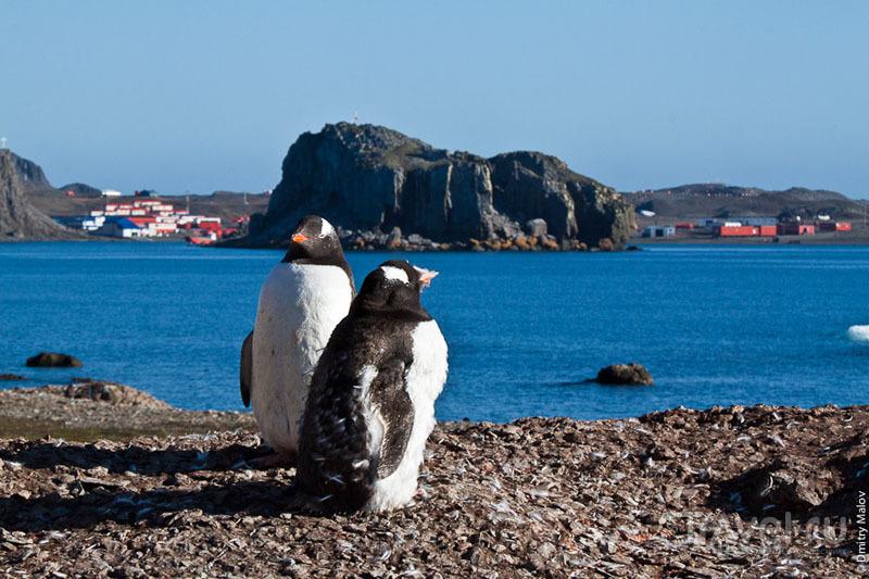 Пингвины в Антарктиде / Фото из Антарктики