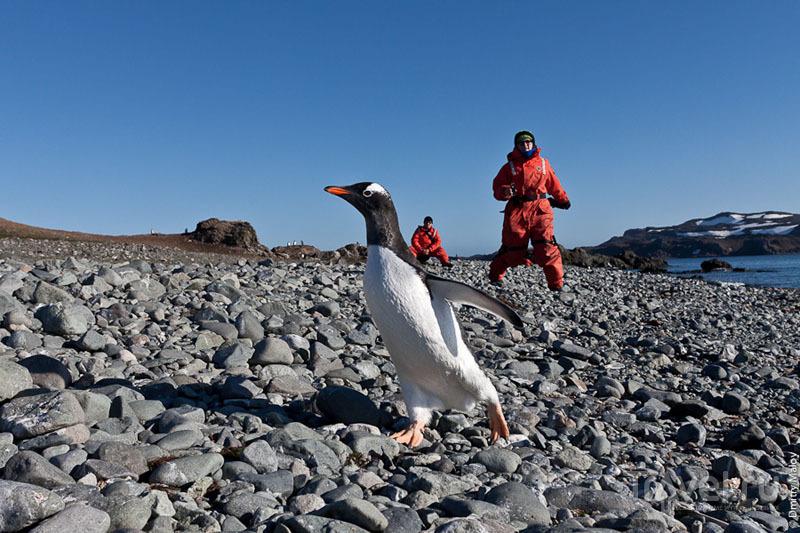 Пингвины и туристы в Антарктиде / Фото из Антарктики