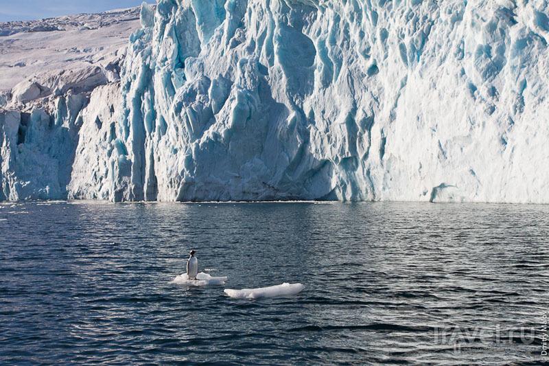 Пингвин на льдине / Фото из Антарктики
