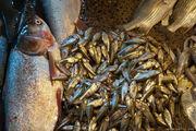 Мелкая рыба / Бангладеш