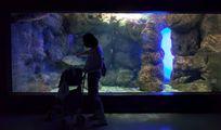 Посетители аквариума / Греция