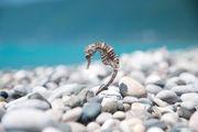 Морской конек / Абхазия