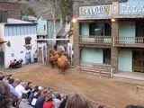 Быки и коровы / Испания