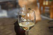 Белое вино / Кабо-Верде