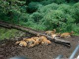 Группа оленей / США
