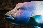 Специальная рыба / ОАЭ