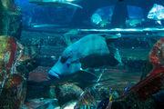 Обитатель аквариума / ОАЭ