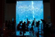 Окно в аквариум / ОАЭ