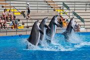 Дельфины в Mariland / Испания
