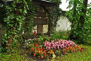Свежие цветы / Германия