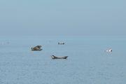 Тюлени на поверхности / Германия
