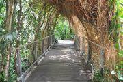 Мост и лианы / Германия