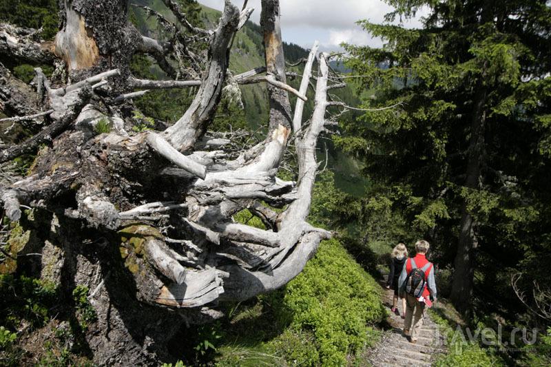 Тропинка в швейцарских горах / Фото из Швейцарии