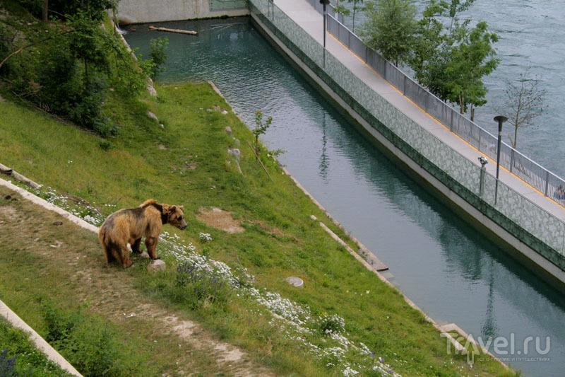 Медведь в Берне / Фото из Швейцарии