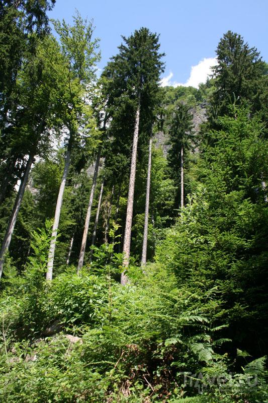Швейцарский лес / Фото из Швейцарии