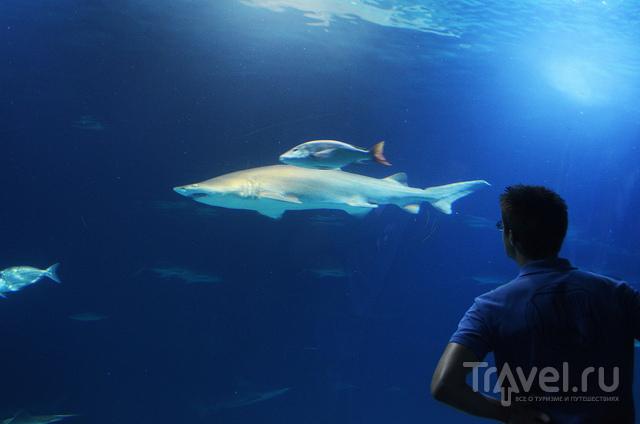 Акулы в Океанариуме / Испания