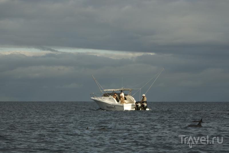 Плавание с дельфинами – незабываемый опыт на Маврикии / Фото с Маврикия