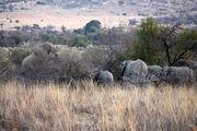 Семейство наблюдает / ЮАР