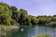 Лебедь на озере / Хорватия