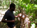 Мачете и кокос / Вануату