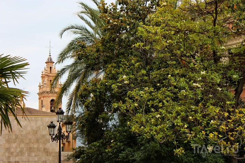 Испанский пейзаж / Фото из Испании