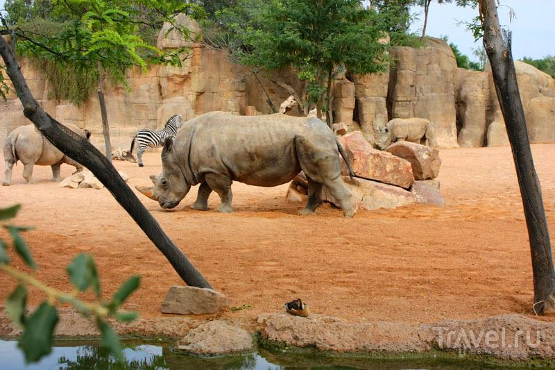 """Носорог в """"Биопарке"""" Валенсии, Испания / Фото из Испании"""