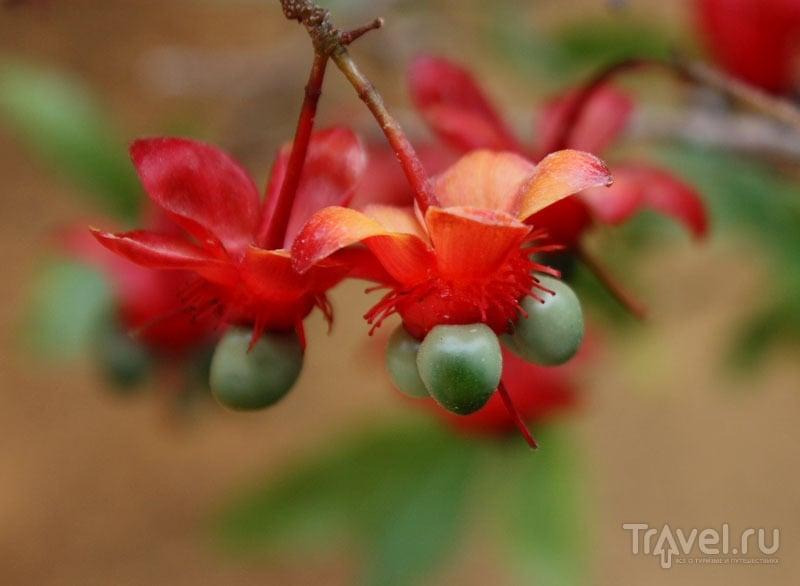 Цветок из Испании / Фото из Испании