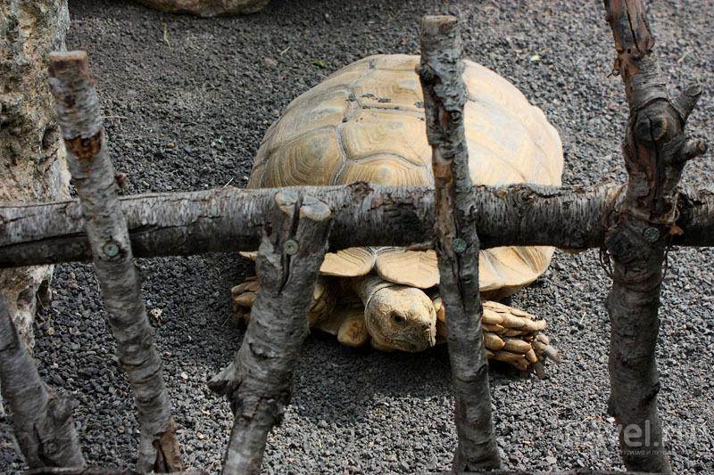 """Черепаха в """"Биопарке"""" Валенсии, Испания / Фото из Испании"""