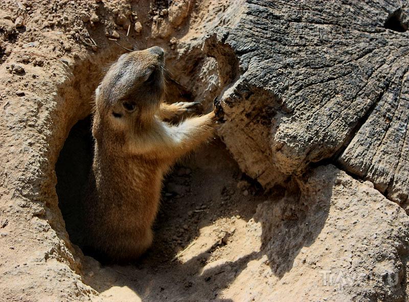 Животные в парке Mundomar в Бенидорме, Испания / Фото из Испании