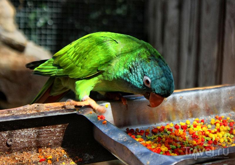 Попугай из парка Mundomar в Бенидорме, Испания / Фото из Испании