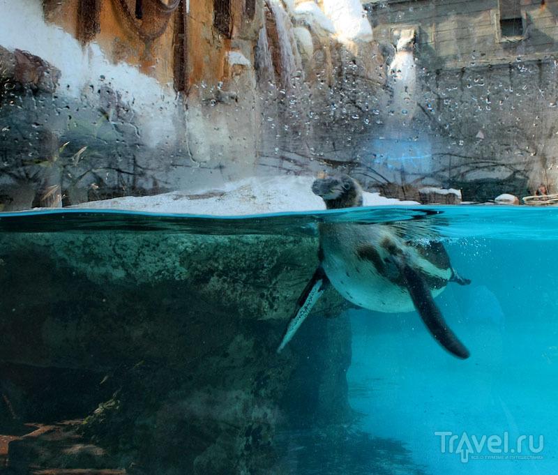 Пингвин в парке Mundomar в Бенидорме, Испания / Фото из Испании