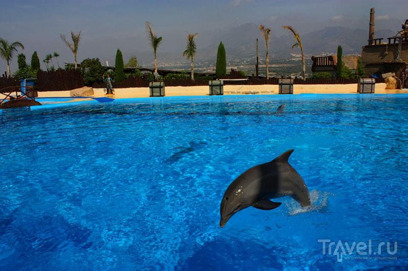 Дельфин в парке Mundomar в Бенидорме, Испания / Фото из Испании