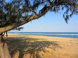 Сосны и песчаный пляж / Мозамбик