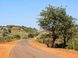 Дорога, обочины и дерево / Мозамбик