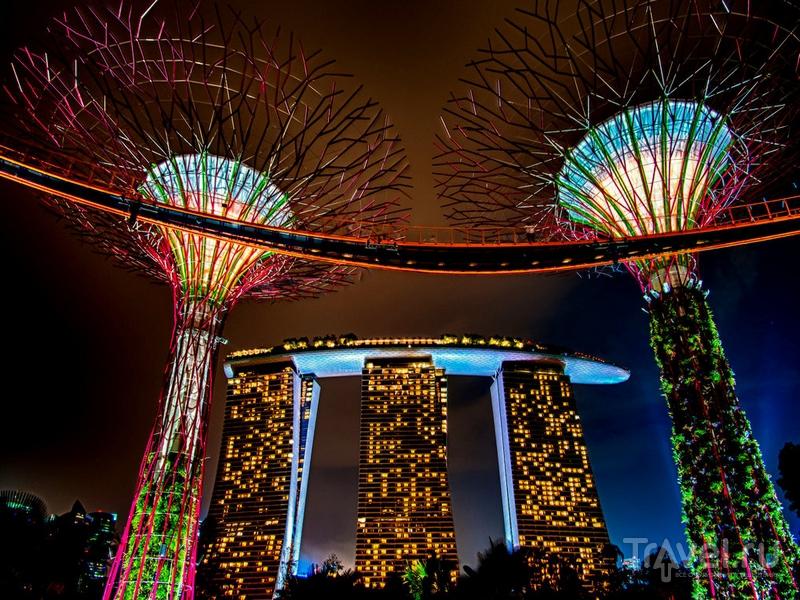Ночные пейзажи тропического парка в Сингапуре / Сингапур