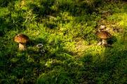 Растут грибы / Финляндия