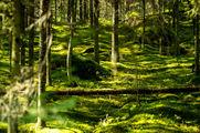 Ухоженный лес / Финляндия