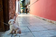 Дружелюбные собаки / Турция